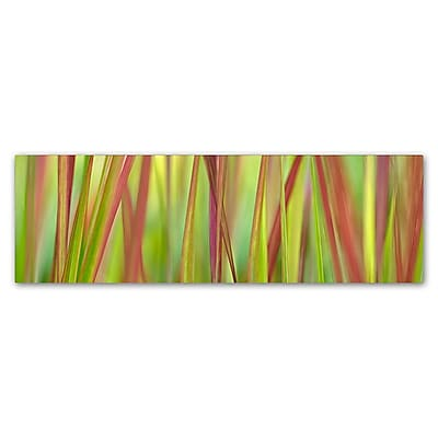 Trademark Fine Art Cora Niele 'Green & Red Grass Scape' 6