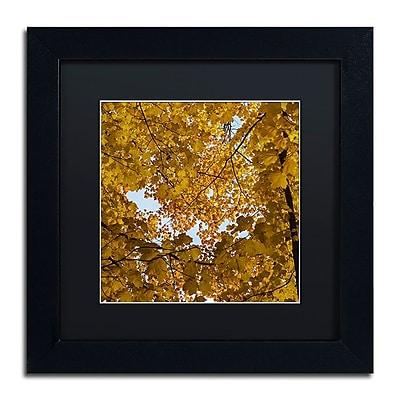 Trademark Fine Art Kurt Shaffer 'Golden Canopy of Autumn' 11