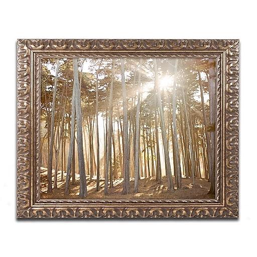 "Trademark Fine Art Ariane Moshayedi 'Presidio Sunset'd Art 11"" x 14"" Ornate Frame (190836273843)"
