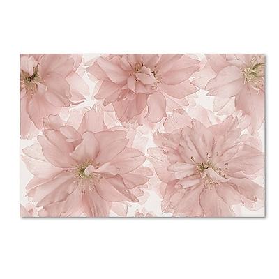 Trademark Fine Art Cora Niele 'Prunus Blossom' 12