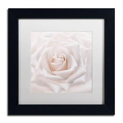 Trademark Fine Art Cora Niele 'Soft White Rose' 11