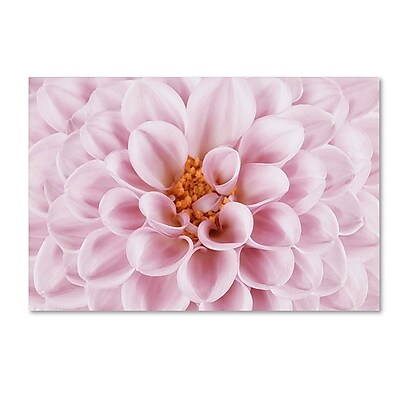 Trademark Fine Art Cora Niele 'Pink Dahlia' 30
