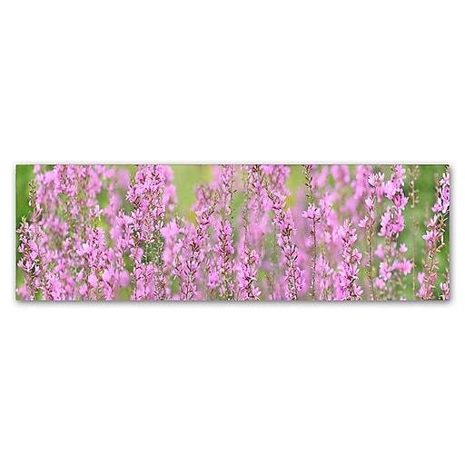 "Trademark Fine Art Cora Niele 'Pink Flower Scape' 8"" x 24"" Canvas Stretched (190836317691)"