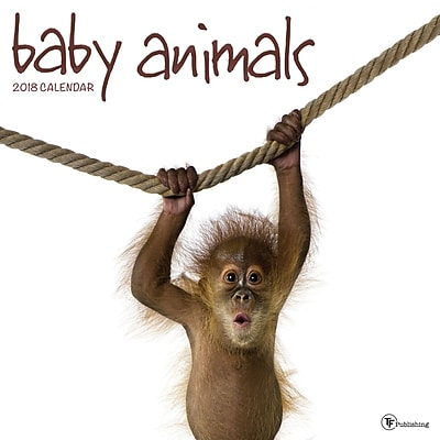 Tf Publishing 2018 Baby Animals Wall Calendar (18-1000)