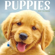 Tf Publishing 2018 Puppies Wall Calendar (18-1011)