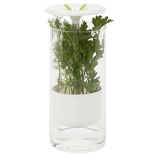 Honey Can Do Herb Preserver, clear/white ( KCH-06398 )