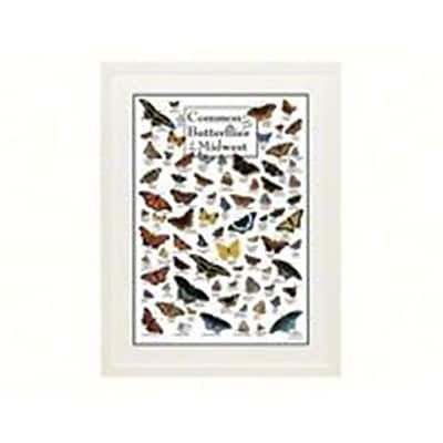 Steven M. Lewers Earth Sky Water Common Butterflies Of Midwest Poster (Gc23766) 23982331