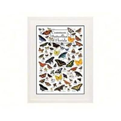Steven M. Lewers Earth Sky Water Common Butterflies Of Florida Poster (Gc23763) 23982332