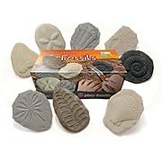 Yellow Door Us Play & Explore Fossils (Essen17366)