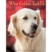 "2018 Willow Creek Press 6.5"" x 8.5"" What Goldens Teach Us Engagement Calendar (47515)"