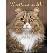 "2018 Willow Creek Press 6.5"" x 8.5"" What Cats Teach Us Engagement Calendar (47492)"
