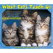 "2018 Willow Creek Press 4.25"" x 5.25"" What Cats Teach Us Box Calendar (46921)"