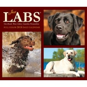 "2018 Willow Creek Press 4.25"" x 5.25"" Just Labs Box Calendar (46846)"