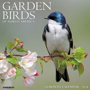 "2018 Willow Creek Press 12"" x 12"" Garden Birds Wall Calendar (44965)"