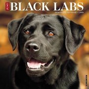 "2018 Willow Creek Press 12"" x 12"" Black Labs Wall Calendar (44187)"