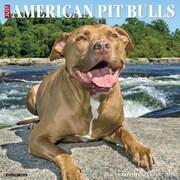 "2018 Willow Creek Press 12"" x 12"" American Pit Bull Terriers Wall Calendar (43937)"