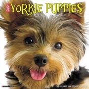 "2018 Willow Creek Press 12"" x 12"" Yorkie Puppies Wall Calendar (46594)"