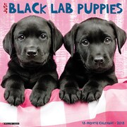 "2018 Willow Creek Press 12"" x 12"" Black Lab Puppies Wall Calendar (44170)"