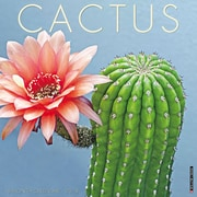 "2018 Willow Creek Press 12"" x 12"" Cactus Wall Calendar (47218)"
