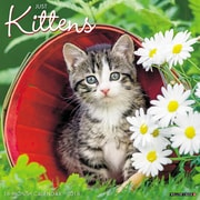 "2018 Willow Creek Press 12"" x 12"" Kittens Wall Calendar (45351)"