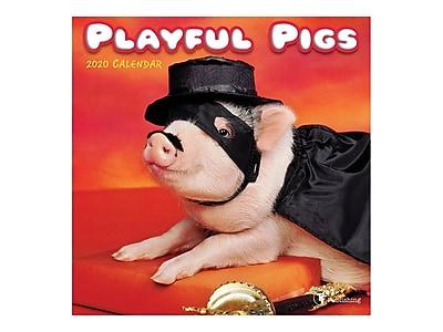 Playful Pigs 2020 Calendar