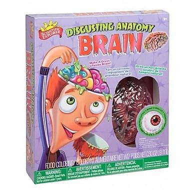 Alex Brands Scientific Explorer Disgusting Anatomy Brain (ALXB263)