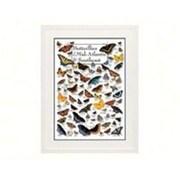 Steven M. Lewers Earth Sky Water Butterflies of Mid-Atlantic Poster (GC23764)