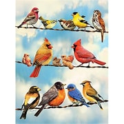 Outset Media Games Birds on a Wire- 500 Piece Puzzle (GC23485)