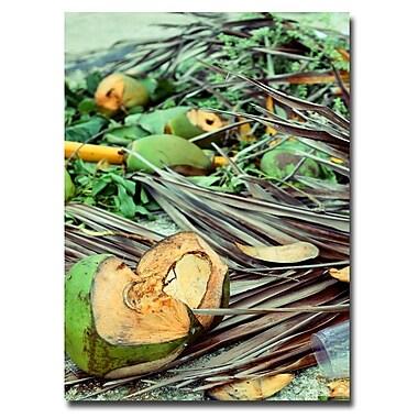 Trademark Fine Art Ariane Moshayedi 'Coconut Jungle' Canvas Art