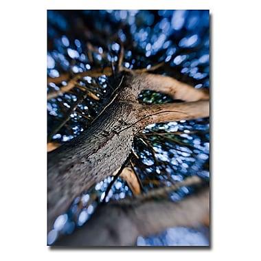 Trademark Fine Art Ariane Moshayedi 'Trunk' Canvas Art