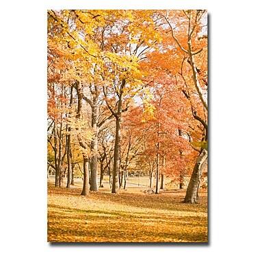 Trademark Fine Art Ariane Moshayedi 'Central Park Trees' Canvas Art