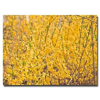 Trademark Fine Art Ariane Moshayedi 'Yellow Buds' Canvas Art