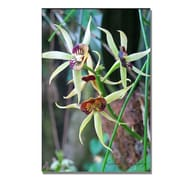 Trademark Fine Art Kathie McCurdy 'Orchids' Canvas Art