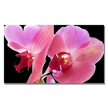 Trademark Fine Art Kathie McCurdy 'Orchid' Canvas Art