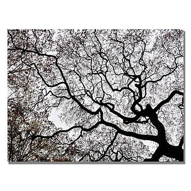 Trademark Fine Art Kurt Shaffer 'Japanese Maple Spring Abstract II' Canvas Art