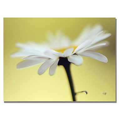 Trademark Fine Art Lois Bryan 'Daisy III' Canvas Art