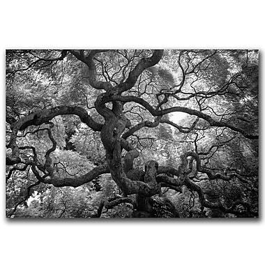 Trademark Fine Art Motivations by CATeyes-Canvas Ready to Hang