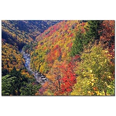 Trademark Fine Art CATeyes 'Autumn's Fire' Canvas Art