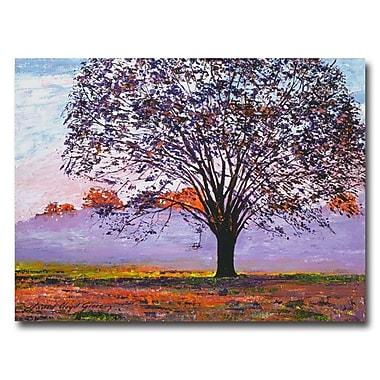 Trademark Fine Art 'Majestic Tree in Morning Mist'