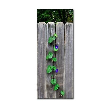 Trademark Fine Art 'Morning Glory Fence 2'