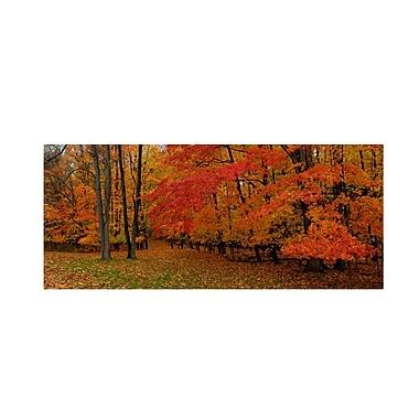 Trademark Fine Art 'Ohio Autumn'