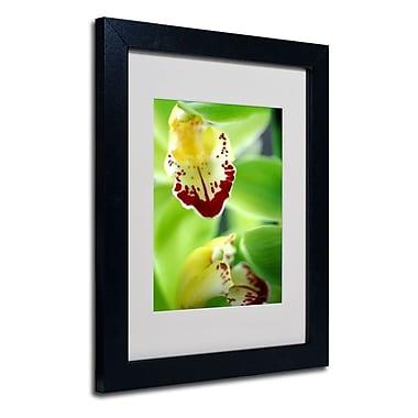 Trademark Fine Art 'Cymbidium Seafoam Emerald Orchid'