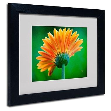 Trademark Fine Art 'Orange Burst'