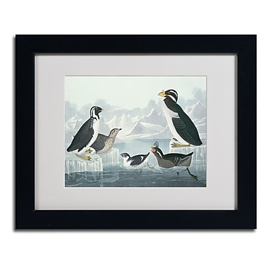 Trademark Fine Art 'Black-Throated Guillemot'