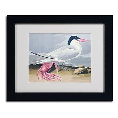 Trademark Fine Art 'Cayenne Tern'