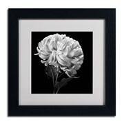 "Trademark Fine Art ALI0292-B-MF ""Mum II"" by Michael Harrison Framed Art, White Matted"