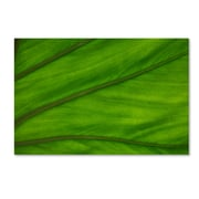 "Trademark Fine Art KS0162-C-GG ""Green Elephant Ear Leaf Abstract"" by Kurt Shaffer Frameless Art"
