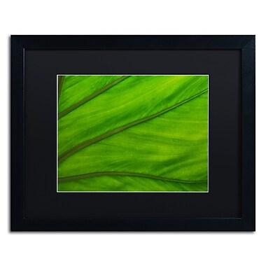 Trademark Fine Art KS0162-B1620