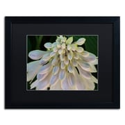 "Trademark Fine Art KS0178-B1620 ""Hosta Flower Abstract"" by Kurt Shaffer 16"" x 20"" Framed Art"