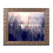 "Trademark Fine Art BC0116-G-F ""Afternoon Glory"" by Beata Czyzowska Young Framed Art"